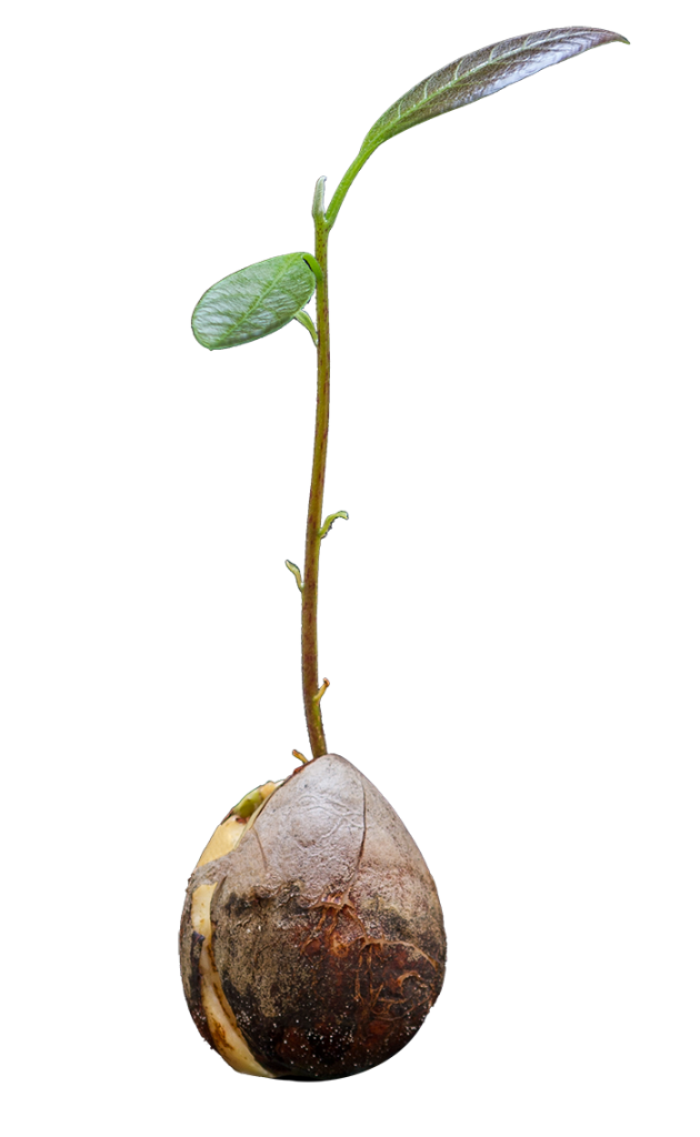 seedling_single-630x1024